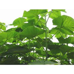 绿化造景工程建筑绿化