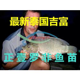 限量销售泰国超快吉富鱼苗