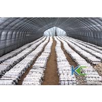 食用菌栽培用温室大棚一亩造价多少钱