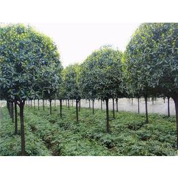园林造景工程种植