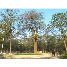 辉煌园林****造景种植工程缩略图