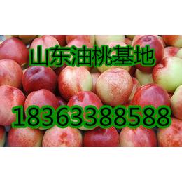 油桃樱桃产地直销今日批发价格