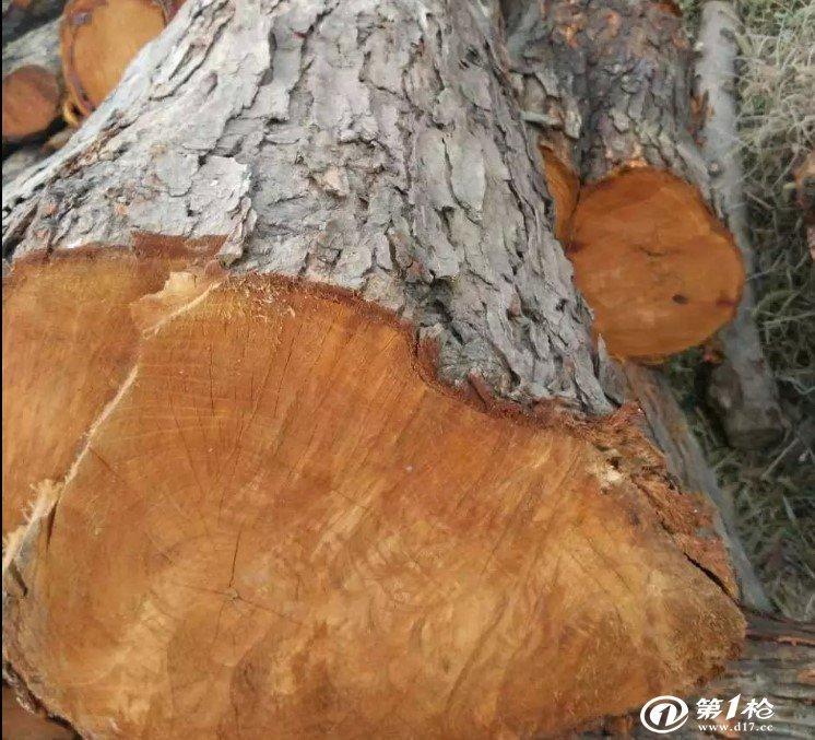 长期供应香椿芽原木楸木原木主要用于家具