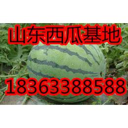 泗水京欣西瓜产地收尾批发 8斤以上精品京欣包熟包甜直销供应