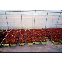 供有机蔬菜育苗基质袋装泥炭土