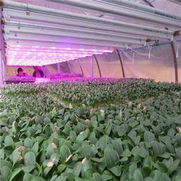 植物生长灯,鑫龙海光电,植物生长灯公司