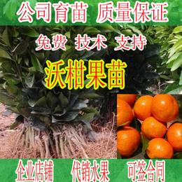 广西在哪里有沃柑果苗培育基地