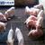方和热镀锌铁丝育肥网厂家缩略图3