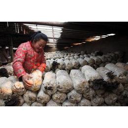 蘑菇养殖大棚 温室种植大棚建造