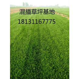 铺草坪多少钱一平方米