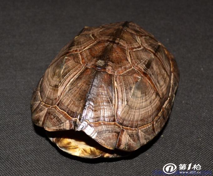 动物 龟 680_563