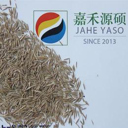 杏园种植鼠茅草丨补充土壤有机质丨绿肥鼠茅草丨北京嘉禾源硕