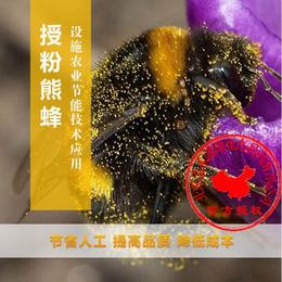 草莓授粉丨熊蜂授粉技术丨蔬菜授粉丨嘉禾源硕