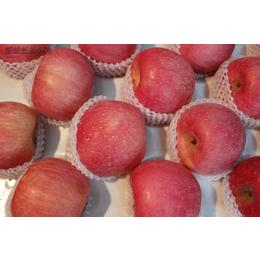 山东红富士苹果产地果农直销批发价格市场行情