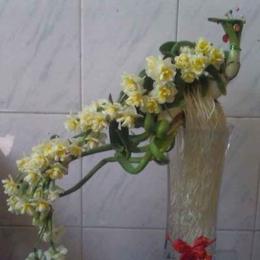 水仙花盆栽在哪里可以买到