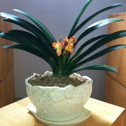 兰花盆栽摆放有什么讲究