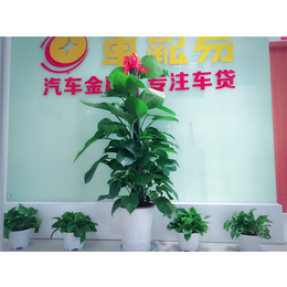 公司花卉展示案例  花卉批发租摆