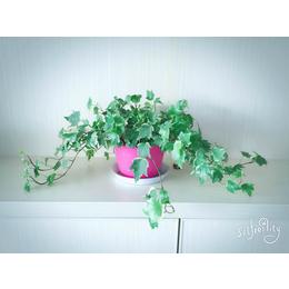 办公桌小型盆栽展示  花卉批发租摆