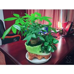 办公桌摆花卉展示 花卉批发租摆