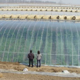 江西生产转光PO膜农用膜