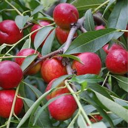 供应水果种植专用棚膜