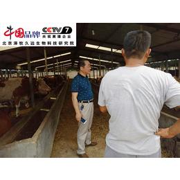 冬季繁育母牛饲料  怀孕母牛预混料  经产母牛饲料