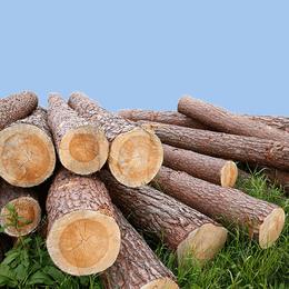 打桩用木材  湿地松 2-6m
