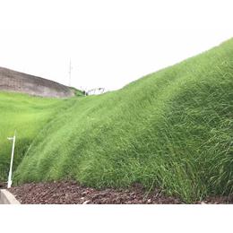 青海西宁山体边坡植草绿化喷播土壤保水剂粘合剂厂家销售