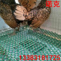 诺克 塑料平网 绿色养殖网 养鹅漏粪网 养鸡脚垫网