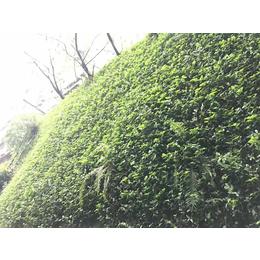 山体边坡植草绿化植生混喷技术专用土壤粘合剂厂家销售