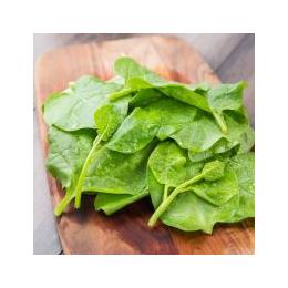 绿色  木耳菜