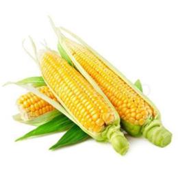 香糯  玉米