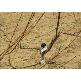 同凯电子(图)、仿声鸟驱鸟器哪家好、仿声鸟驱鸟器