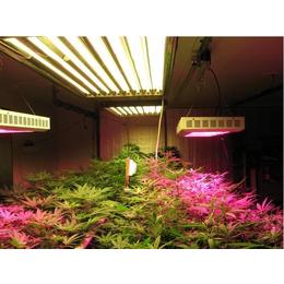 宁夏农用植物生长灯_宁夏农用植物生长灯有用吗_同凯电子
