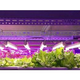 大棚草莓补光灯、大棚草莓补光灯价格、同凯电子(优质商家)