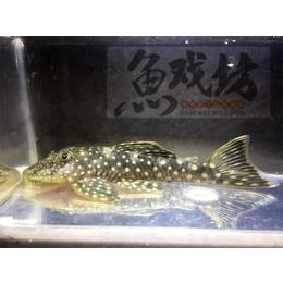观赏鱼基地 庆祥伟业 天津观赏鱼