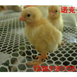 塑料平网_胶网_白色塑料网_塑料养殖网_塑料脚垫网