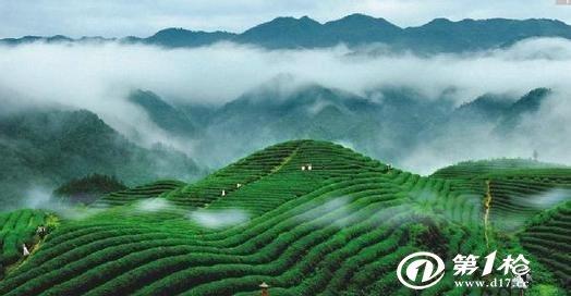 江西特色茶廬山云霧