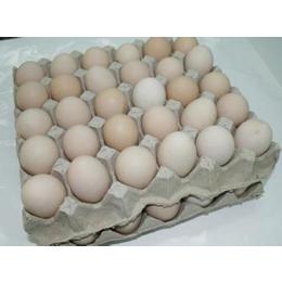 鲜农同城   白壳鸡蛋缩略图