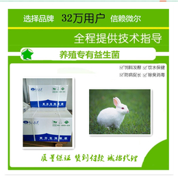 獭兔益生菌调节肠道降低氨臭
