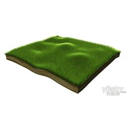 博野太行品质草皮生产工艺