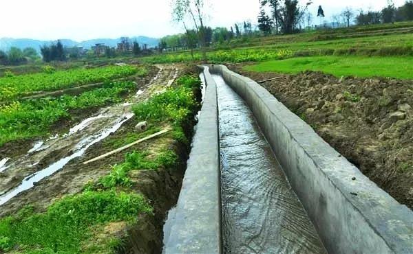 哪種節水灌溉方式好?滴管、噴灌……選擇適合的才是好的