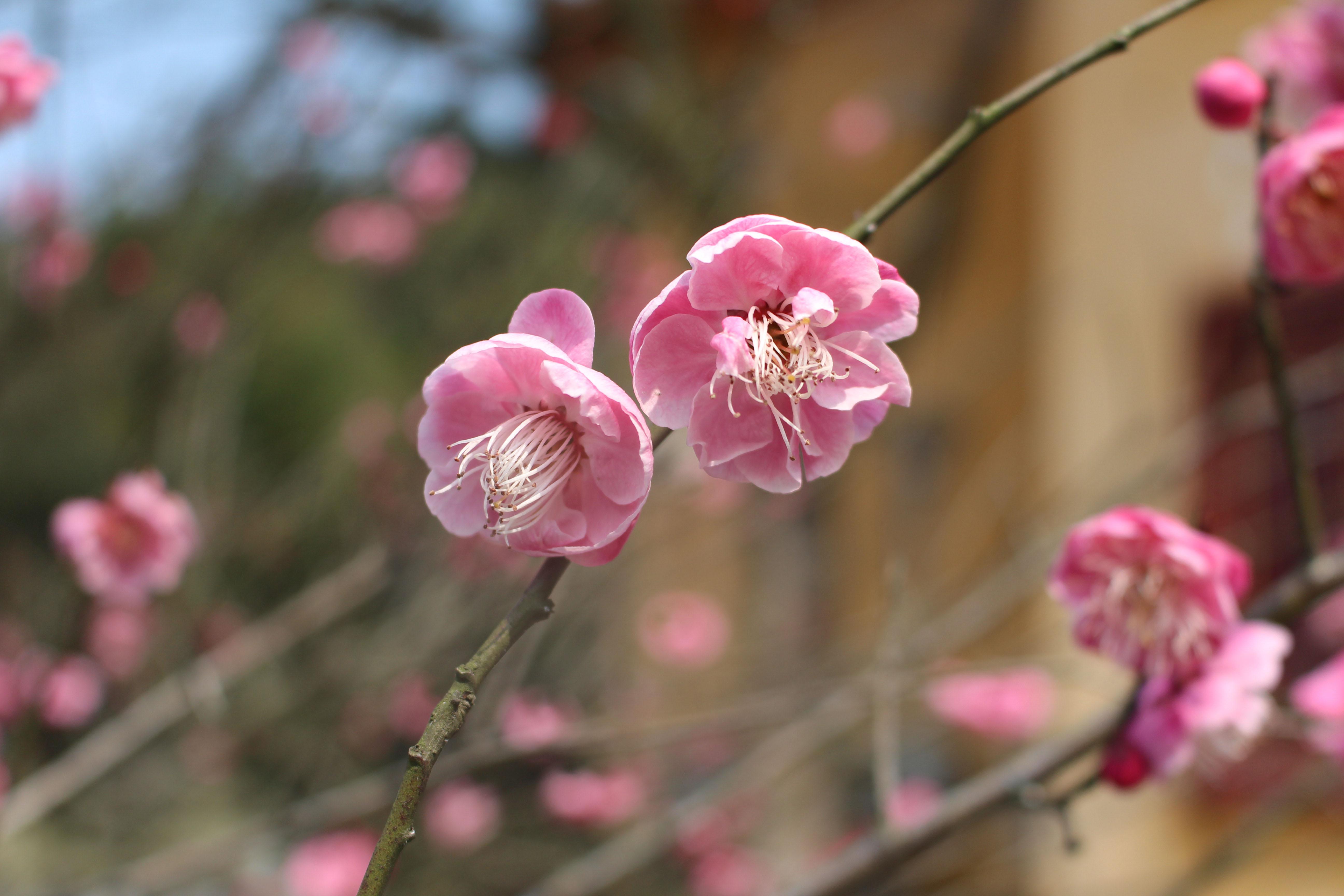 【健康柴桑】阳春三月,陪女神爬爬山——三八妇女节活动纪行