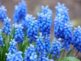 曲靖花卉育苗移动苗床-从设计生产到成品安装-安平华耀