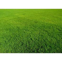 腾龙娱乐183-888-----55011绿化草皮