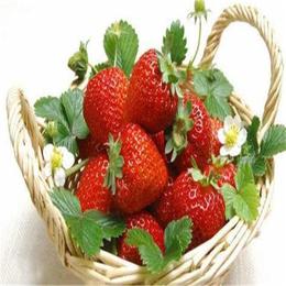 四平草莓苗、双湖园艺、甜查理草莓苗