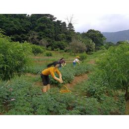 稻草人厂家工艺品的制作流程如何安装可以出租出售吗
