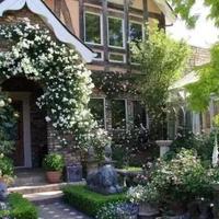 庭院景观树选择、栽种看过来~