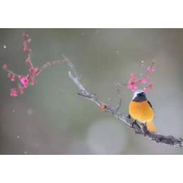 耐火窗耐火时间_一维工贸(在线咨询)_江苏耐火窗