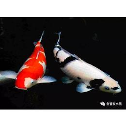 全国免费线上鱼病诊断